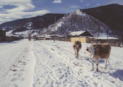 Animals of Buguldeyka